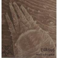 Tarsus - Solifugae [CDR]